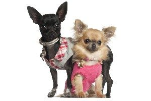 две собачки - мальчик и девочка