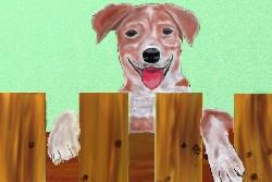 собака и забор