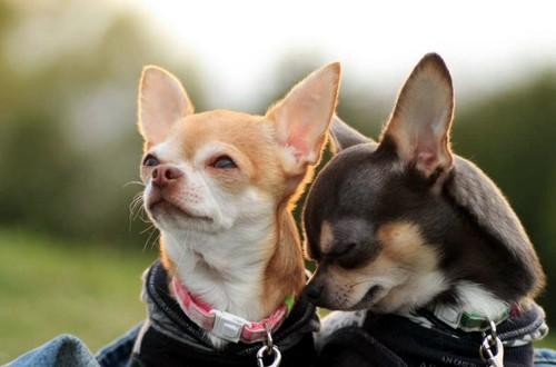 Собачки на прогулке