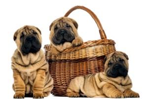 щенки в корзине
