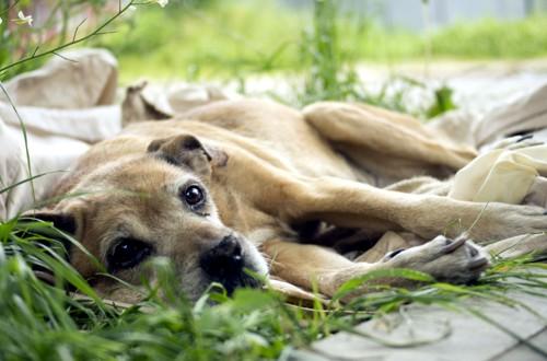 пес с грустными глазами