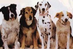 собаки компаньоны в частный дом