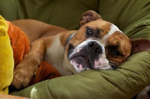 чем помочь собаке при эпилепсии