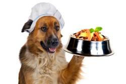 Песик и миска с едой