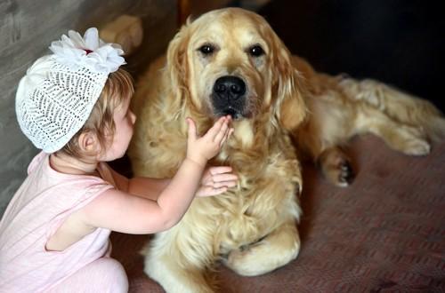 ретривер и ребенок