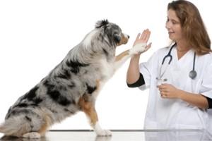 здоровый пес
