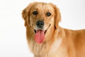 здоровая кожа и шерсть у собаки