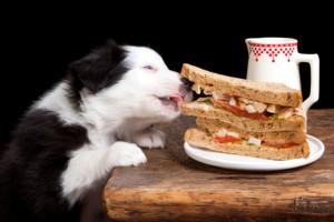 собака тащит еду со стола
