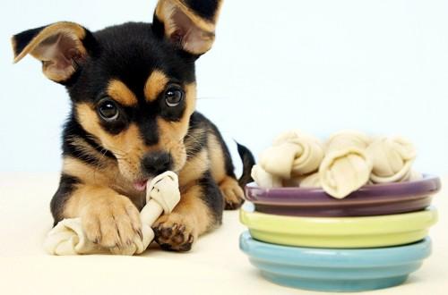 собака ест лакомство