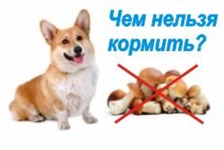 запрещенные продукты для собак