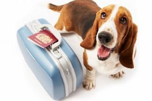 собачка с чемоданом