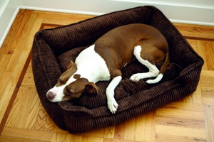 межпозвоночная грыжа у собаки