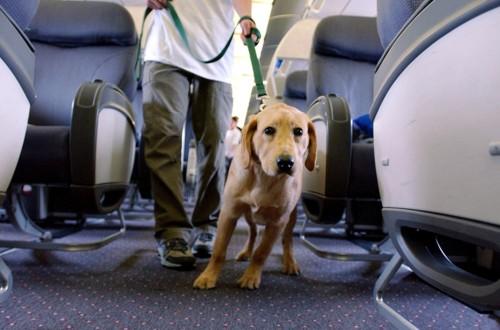 песик в самолете