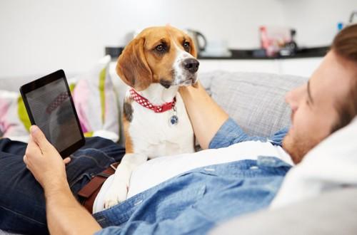 гипоаллергенная собака
