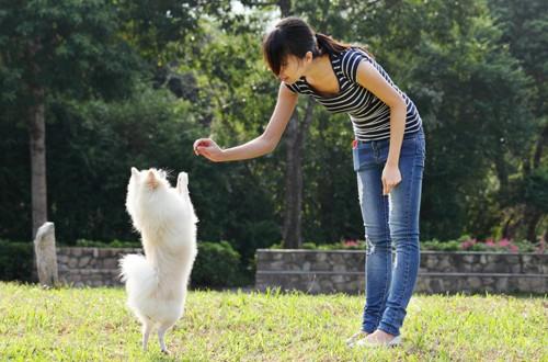 обучение собаки с помощью лакомства