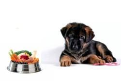 щенок и миска с растительной пищей