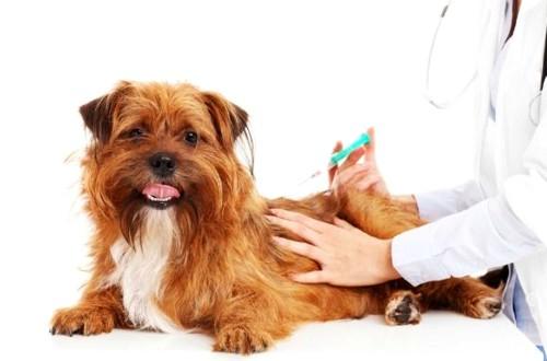 вакцинация пса