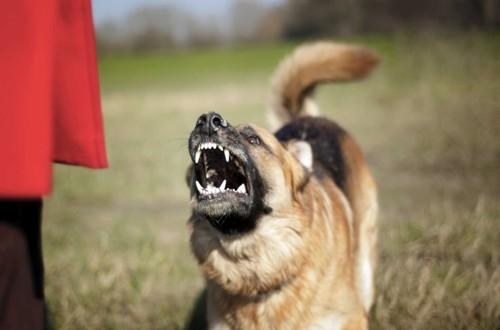 пес огрызается на обидчика