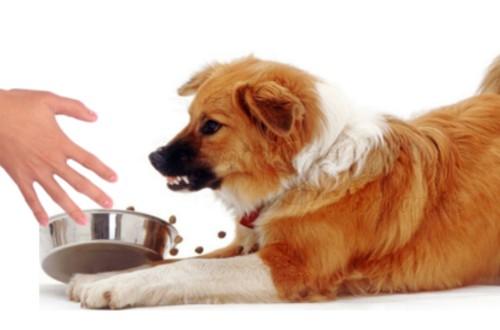 агрессия пса при отнимании еды