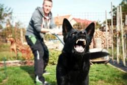 проявление агрессии у пса