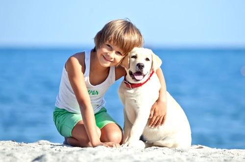 лабрадор и мальчик на море