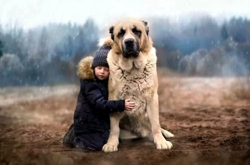 огромный алабай и мальчик