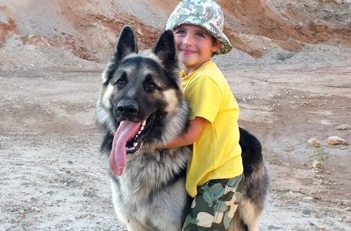 собака вео с ребенком