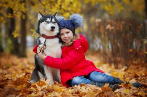 пес хаски и девочка подросток