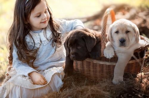 девочка выбирает щенка