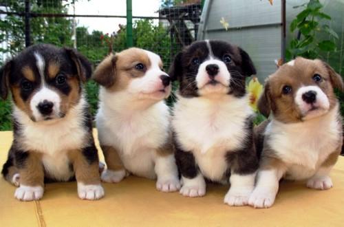 щенки в питомнике