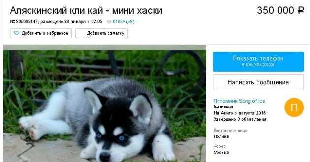 объявление на авито о продаже кли-кая