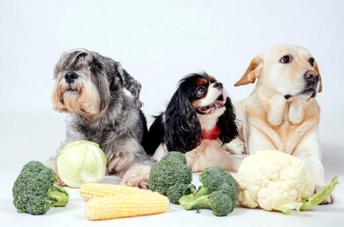 собаки броколли и кукуруза