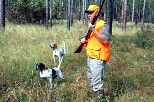 охота на барсука с гончими собаками