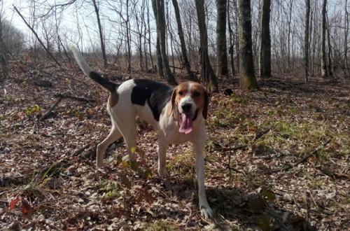 пес в лесу
