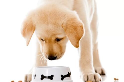 щенок ест сухой корм