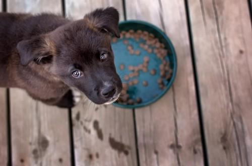 щенок 2 месяца ест сухой корм