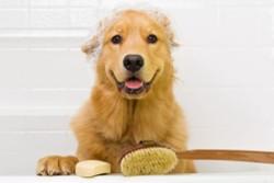 довольный пес с пеной на голове