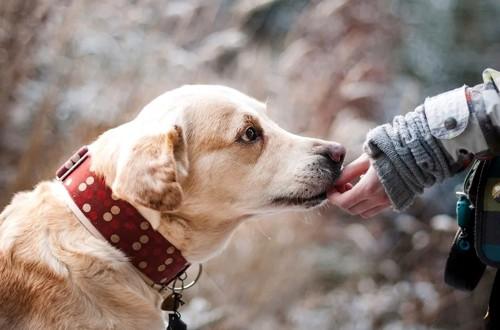 собака ест витамины с руки