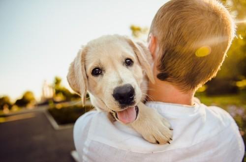 здоровый пес обнимает хозяина