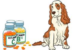 кокер спаниэль и витамины в баночках