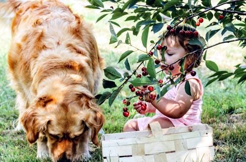 пес с красивой шерстью и ребенок