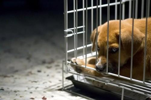 щенок наказан за непослушание