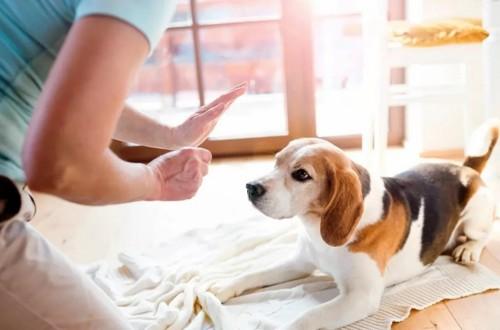 отучаем собаку хватать за руки