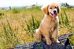 пес на природе